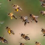 Decentralized organizations working like a swarm with AI